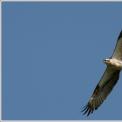 Linnutee matkarada ja Roheline klass
